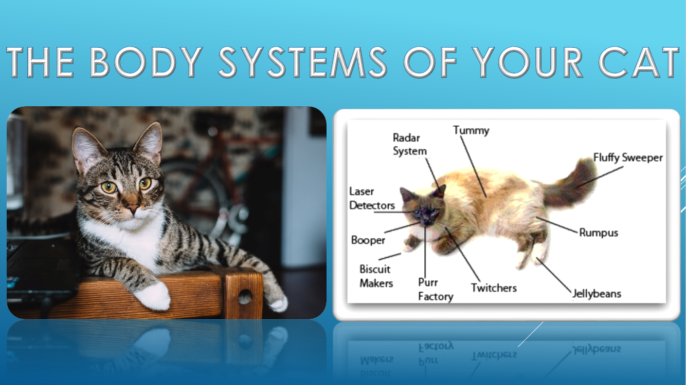 The body systems of your cat