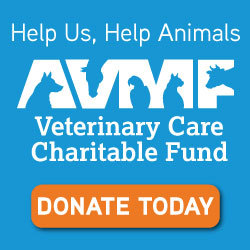 AVMF charitable fund link